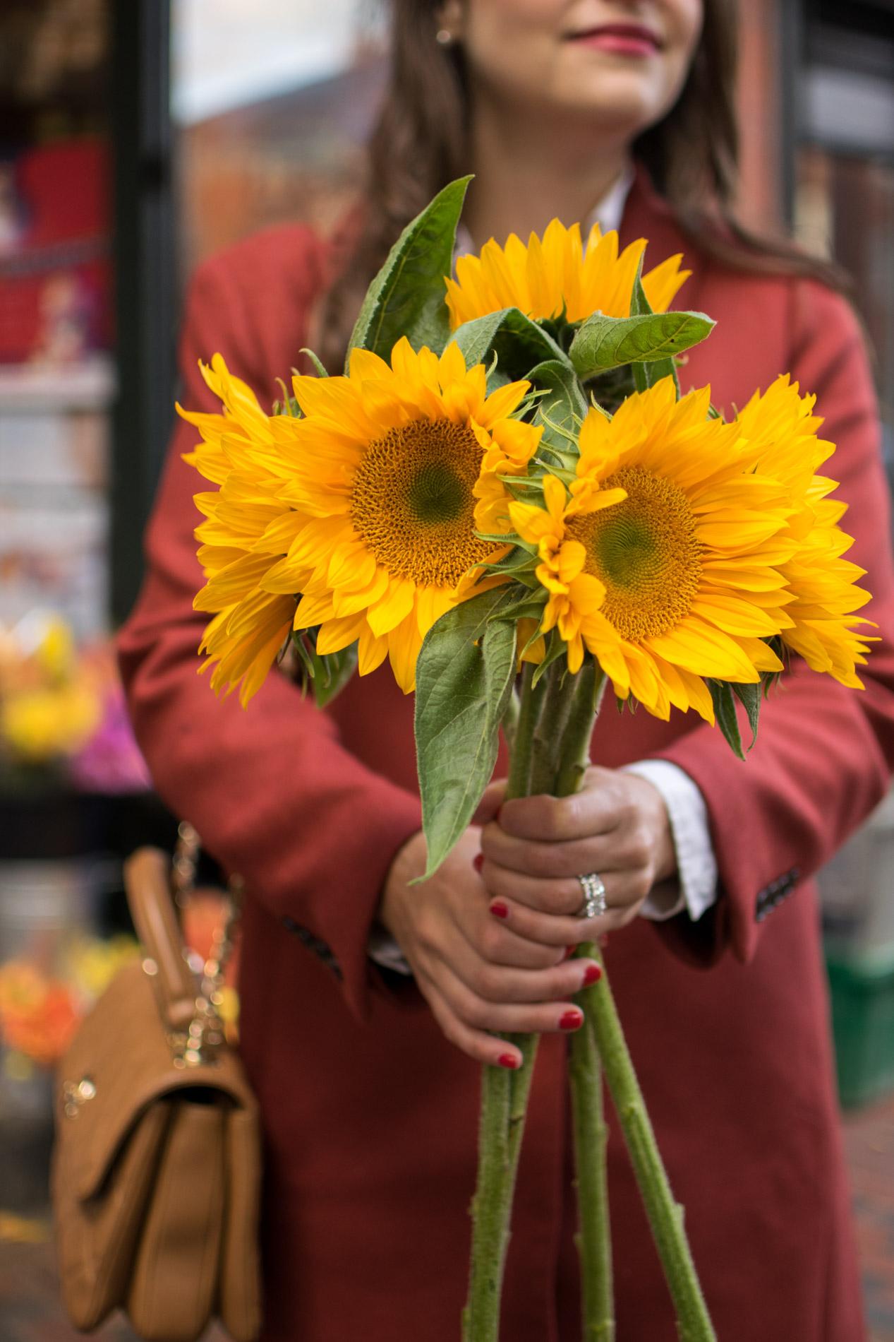 sunflowers, siena farms boston, fall in boston, the-alyst.com
