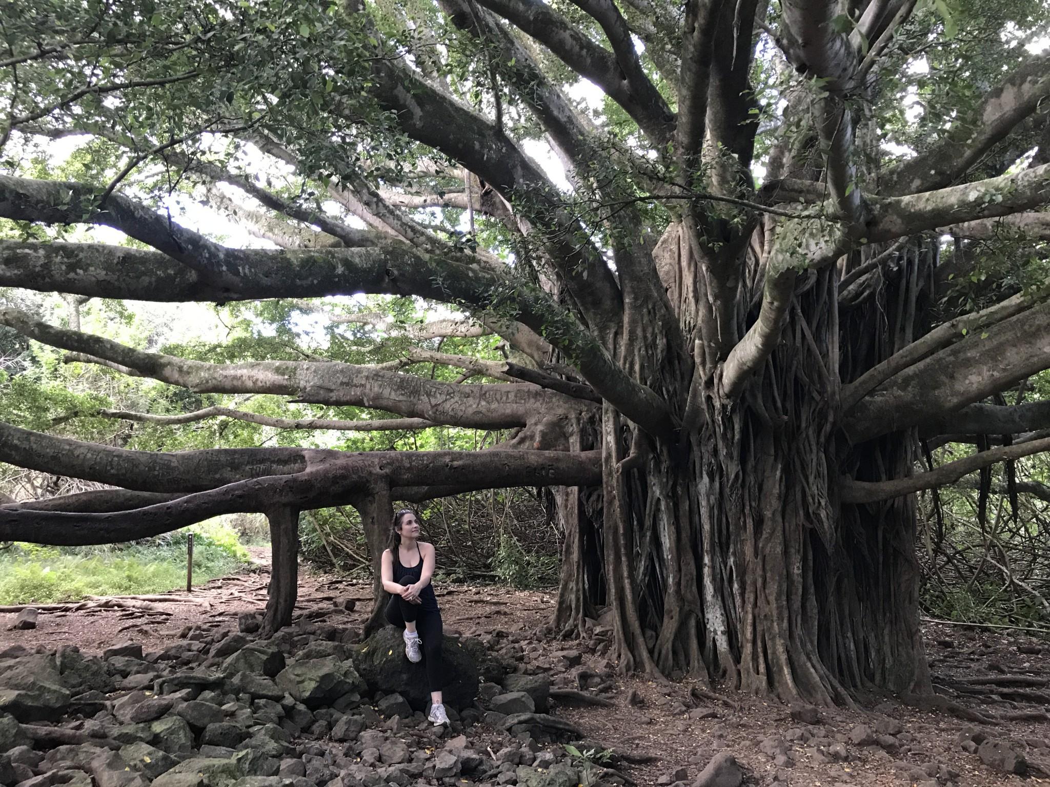 banyan tree, road to hana, haleakala national park, the-alyst.com