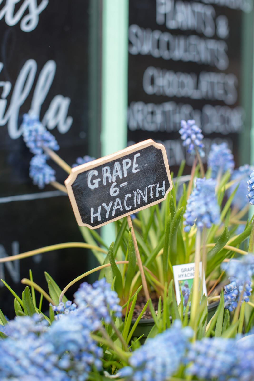 hyacinth, boston, the-alyst.com