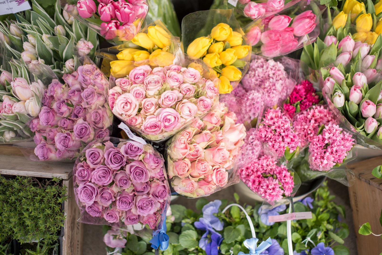roses, boston, the-alyst.com