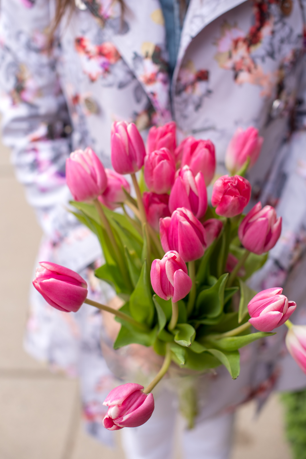 pink tulips, boston, the-alyst.com