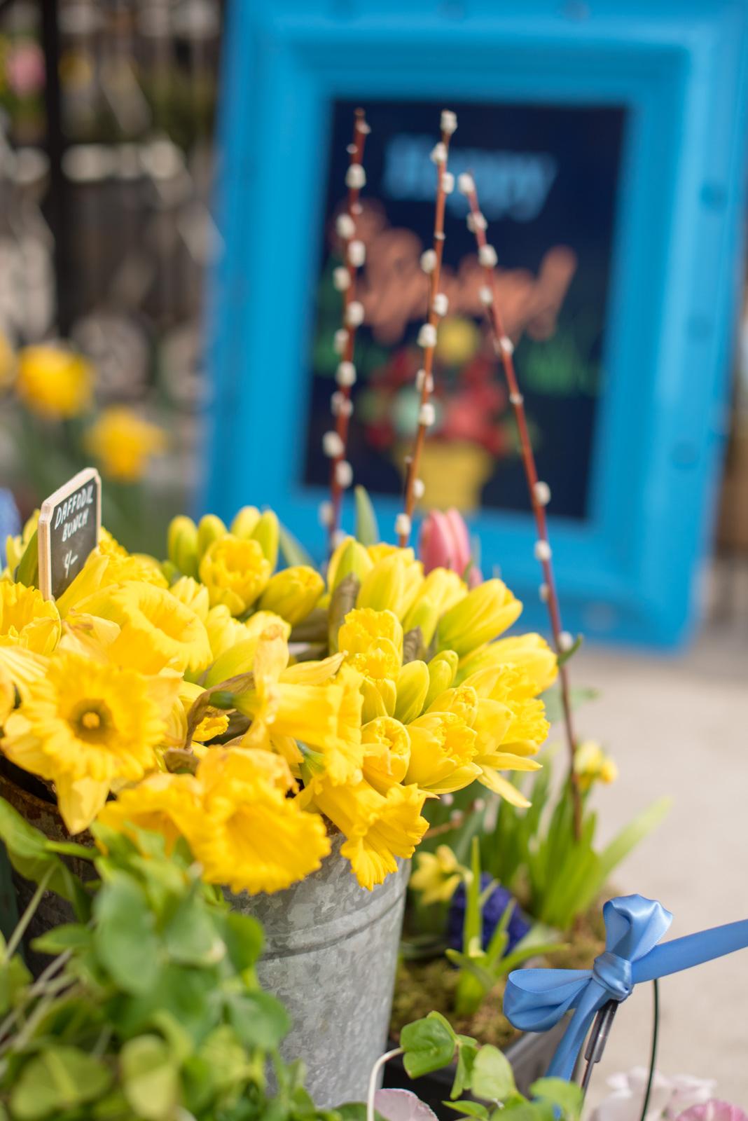 daffodils boston, the-alyst.com