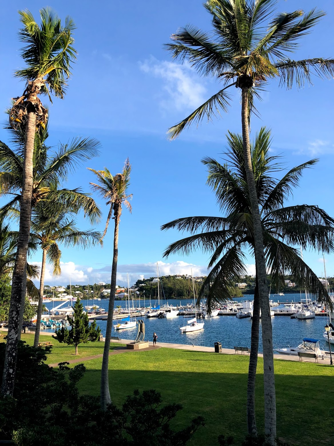 hamilton, bermuda, the-alyst.com